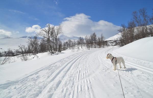 Grotli Skridulaupen ski sol