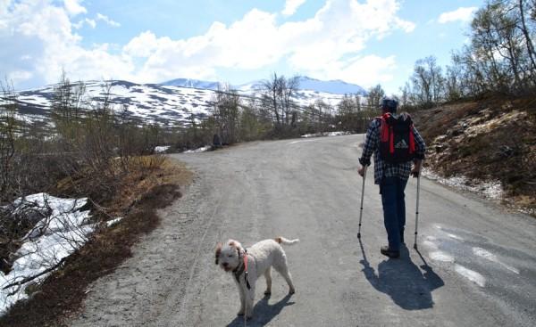 Strynsfjellvegen mot Skridulaupen 02.06.16