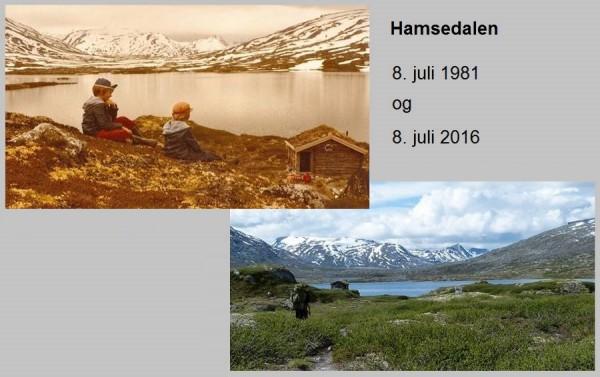 Hamsedalen 1981 og 2016