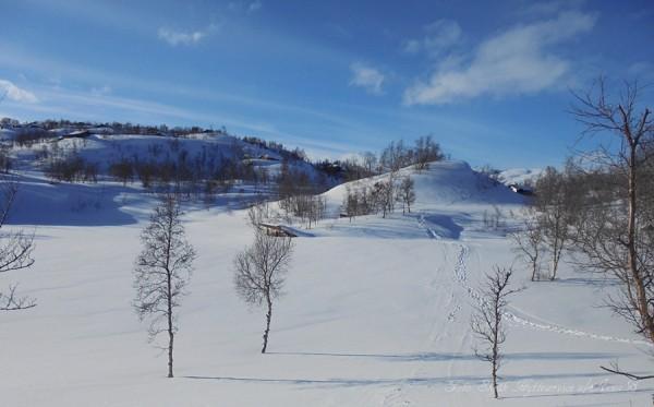 grotli hyttegrend 23.03.17